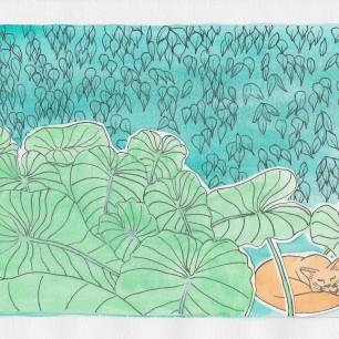 cats-plants